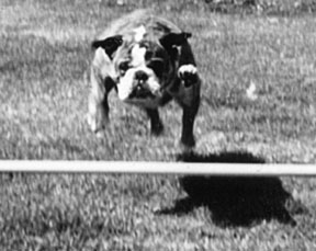 Puppy Training Classes Teach Self Control