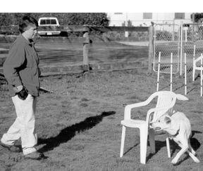 off leash training