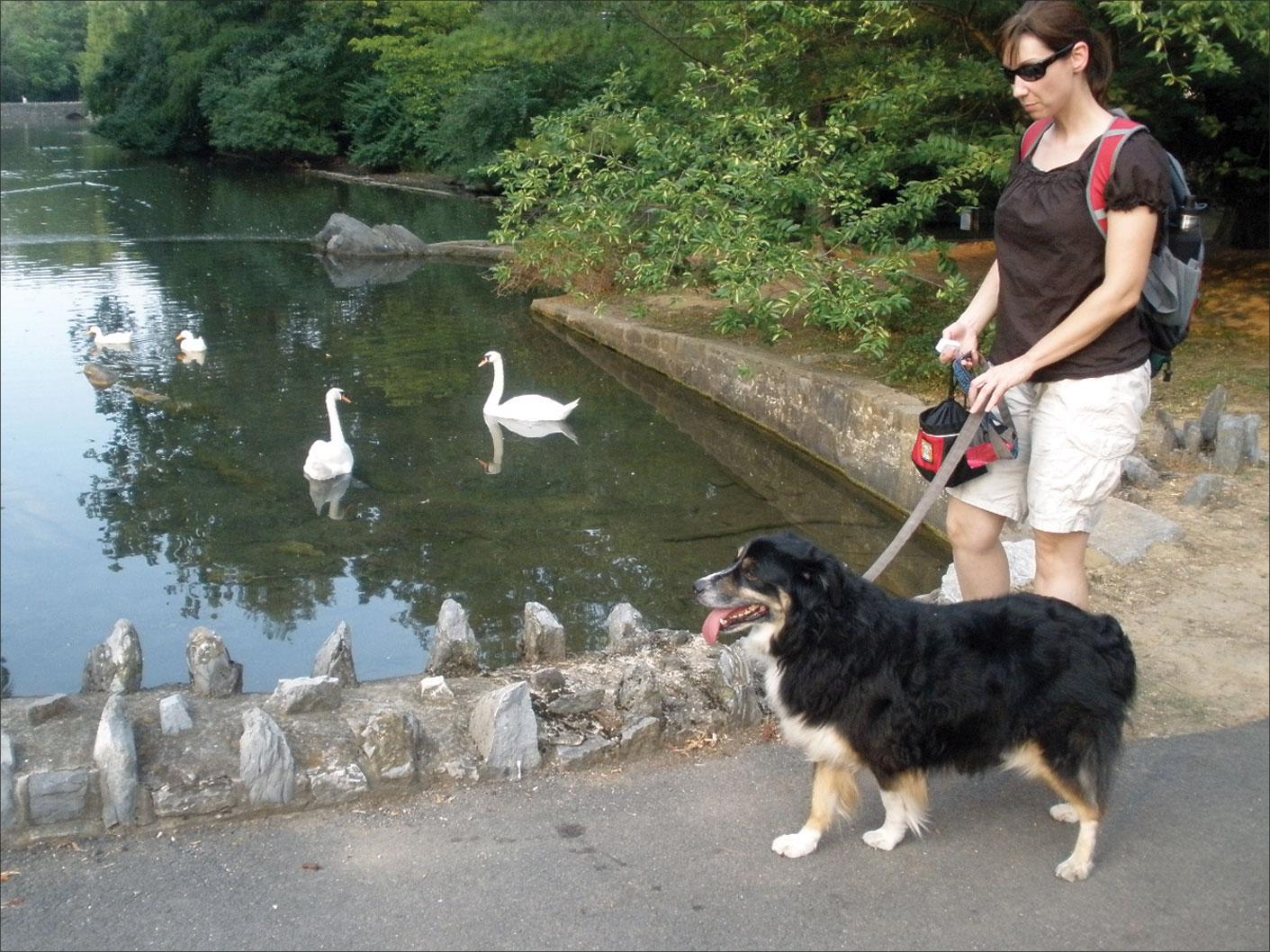 training dog to respect ducks