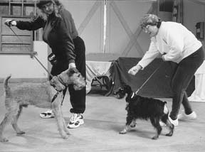 Aggresive Dog Classes