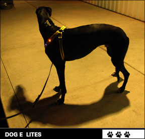 Dog E Lights