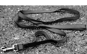 Leading Leashes – Harnesses and Collars for Leash Training