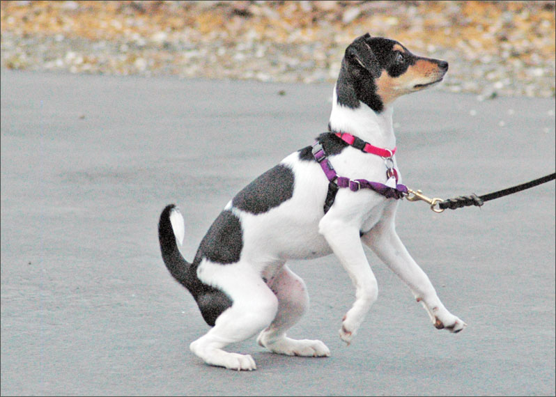 puppy in harness