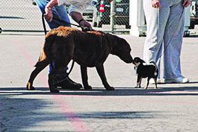 big dog greeting