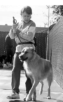 Best Dog Training Approaches