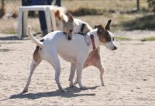 Keeping Your Dog Intact - Whole Dog Journal