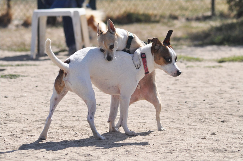 dog park humping