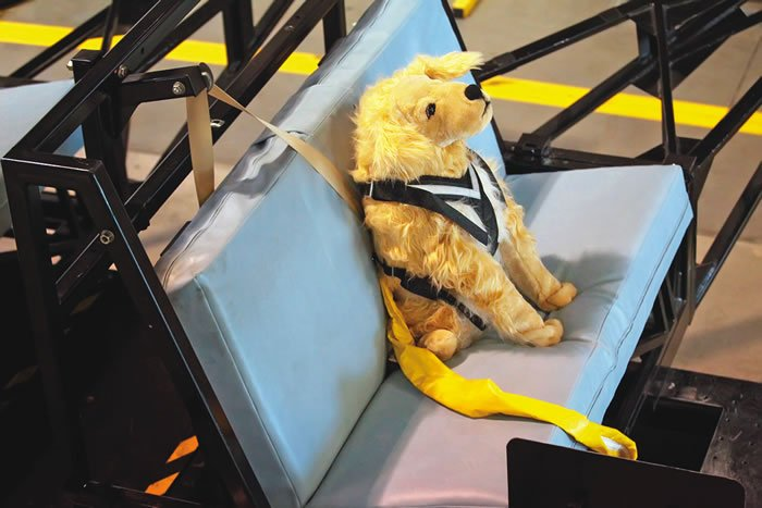 crash test dummy dog