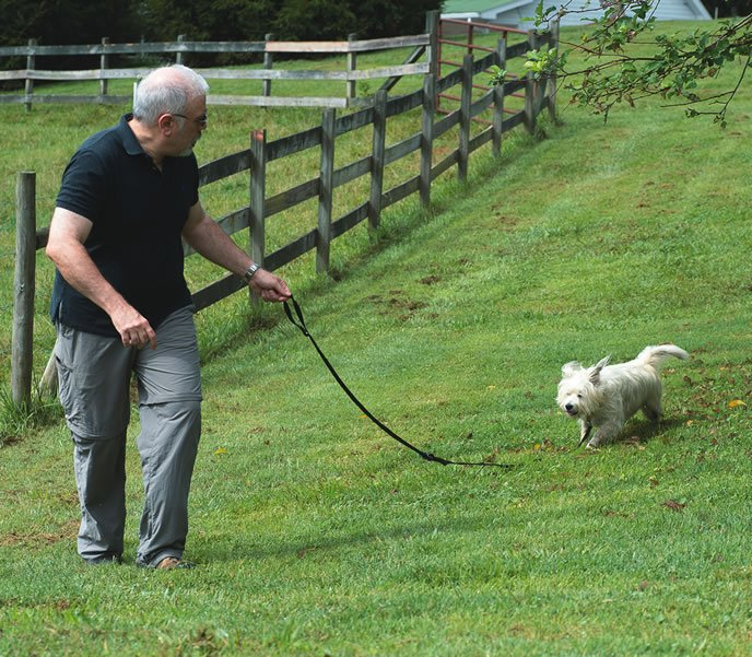 dog leash games
