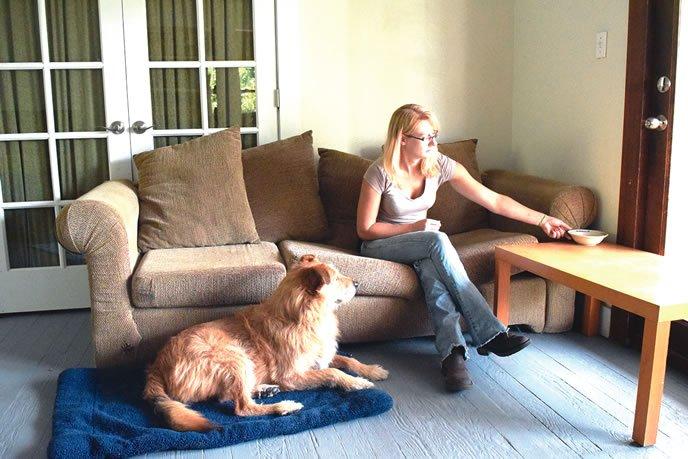 teach dog to settle down