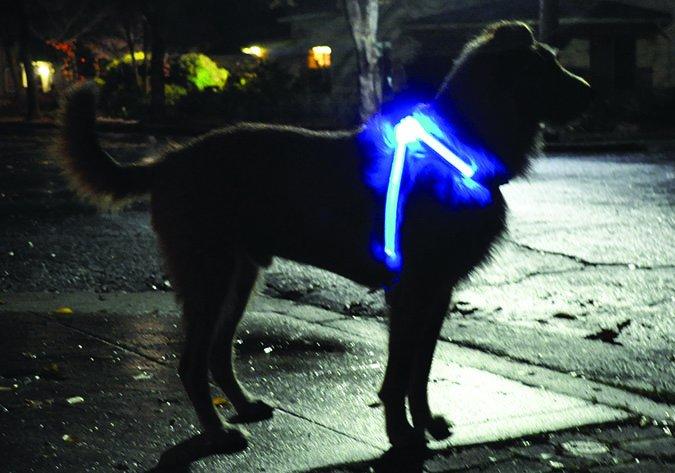 Lighthound night dog collar