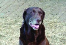 ligament injuries in dogs