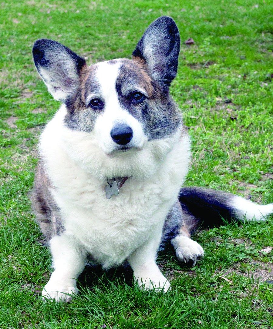 help diabetic dogs