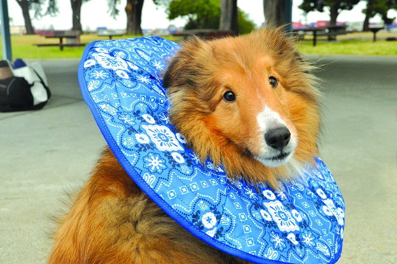 Comfortable Dog Cone Alternatives Whole Dog Journal