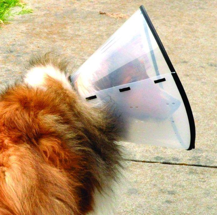 dog cone alternatives