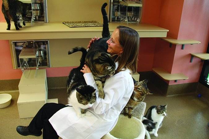 Pet Food Companies and Animal Research: What Do They Do?