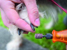 trimming dog nails