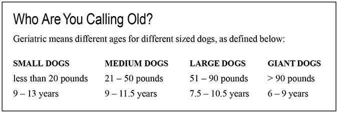 geriatric dog age range