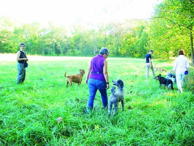 www.whole-dog-journal.com