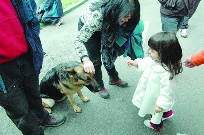 child meeting dog