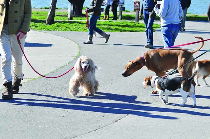 walking dog in crowds
