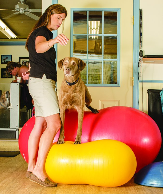 physical therapy for dogs