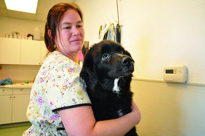 giving dog eye medicine