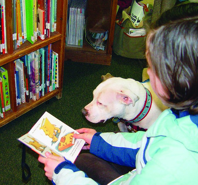therapy pit bull