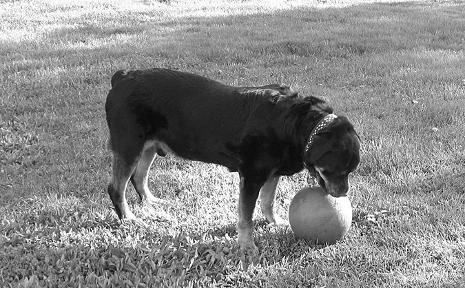 Natural Dog Arthritis Treatments