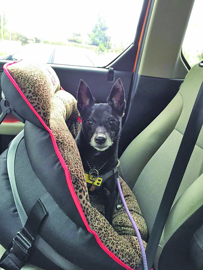 Pupsaver small dog car seat
