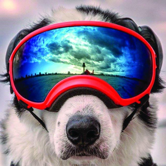 Rex-Specs dog goggles