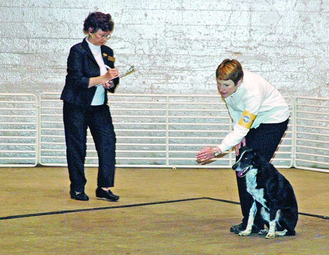 formal dog retrieval competition