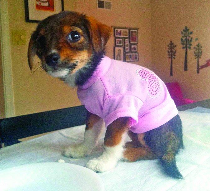 puppy with parvo