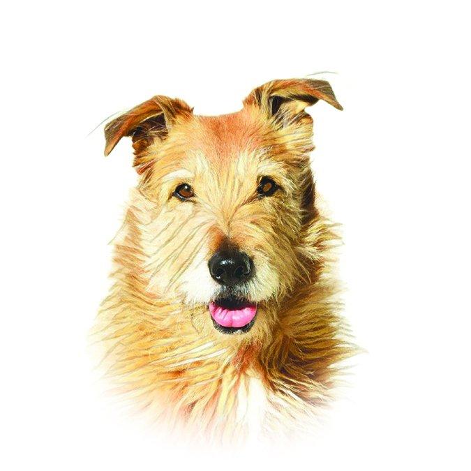 whole dog journal new logo