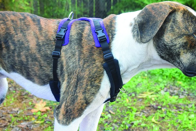 clean run perfect fit dog harness