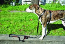 front clip dog harness