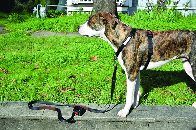 The Best Dog Harnesses - Whole Dog Journal