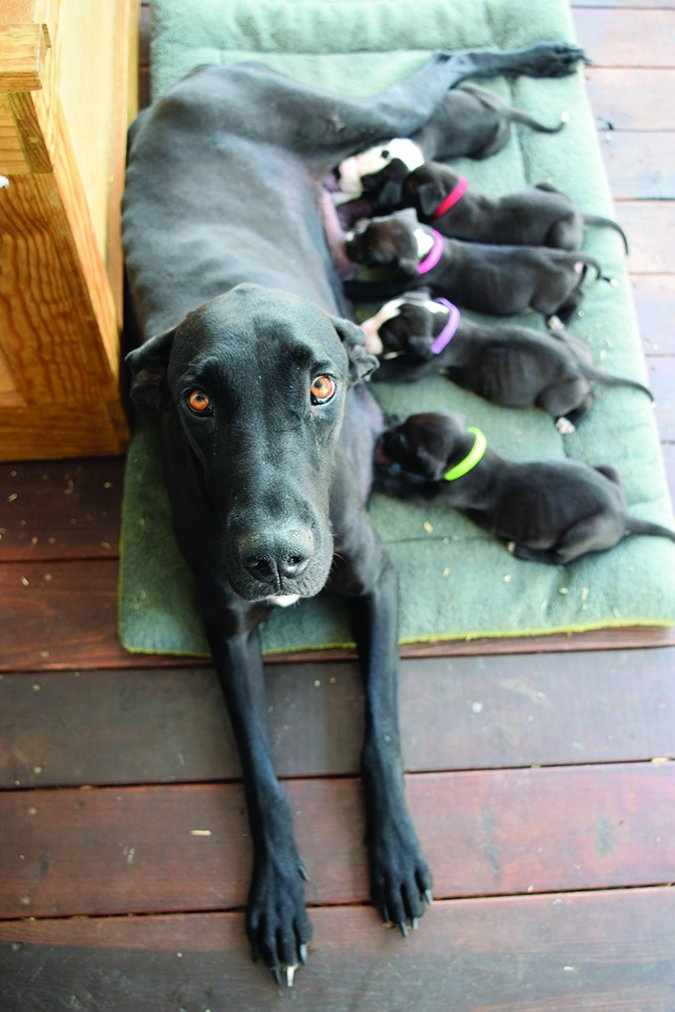 shelter dog and puppies