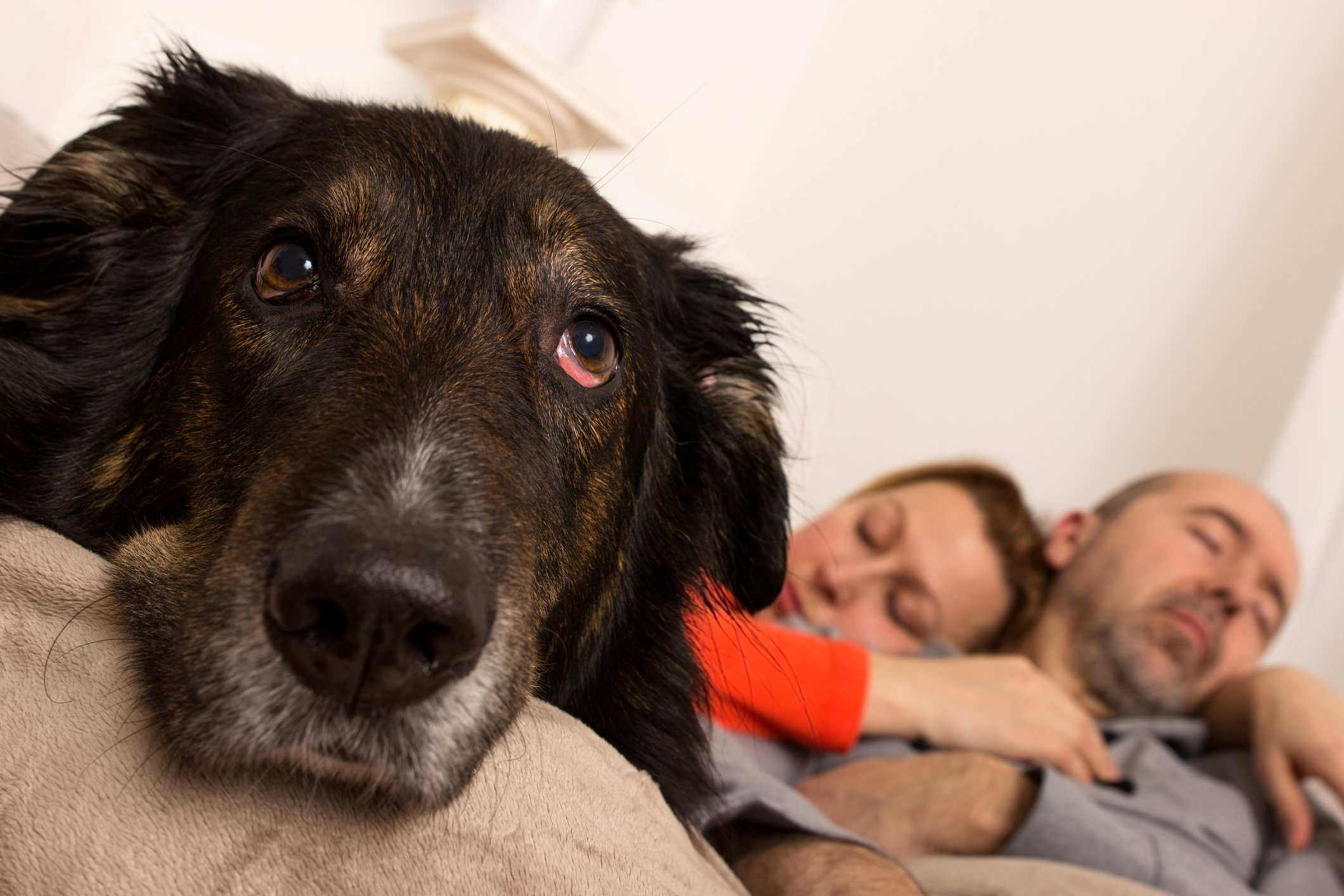 7 Separation Anxiety Myths Whole Dog