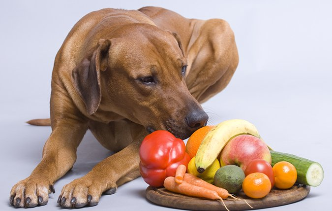 5 Steps to Enhancing Your Dog's Store-Bought Dog Food - Whole Dog Journal