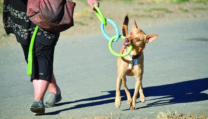 distracting dog on walk
