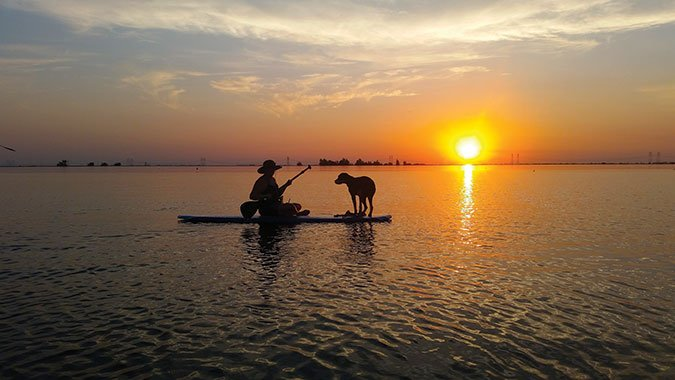 dog on paddleboard