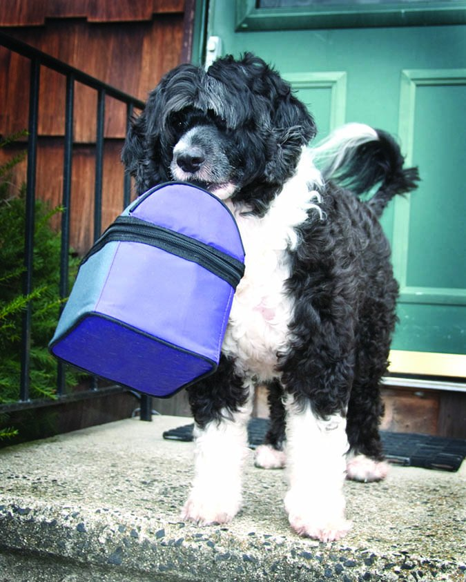 dog with lunchbox