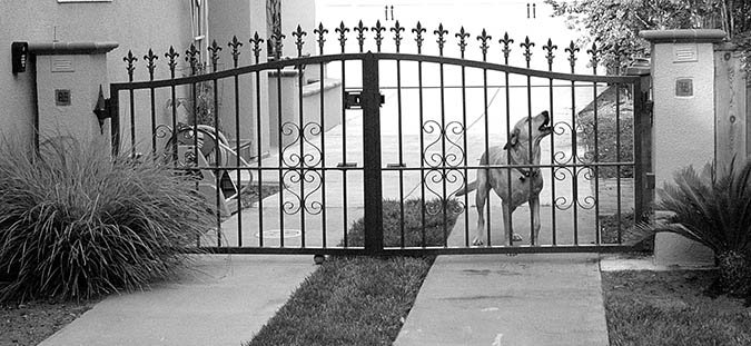 neighborhood barking