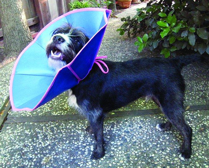 ElizaSoft & Trimline Recovery Collars