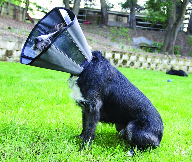 2017 Best Dog Cone Alternatives Whole Dog Journal