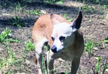 Moving On After Losing an Older Dog - Whole Dog Journal