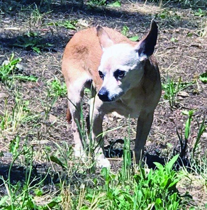 Pet Euthanasia Gone Wrong - Whole Dog Journal