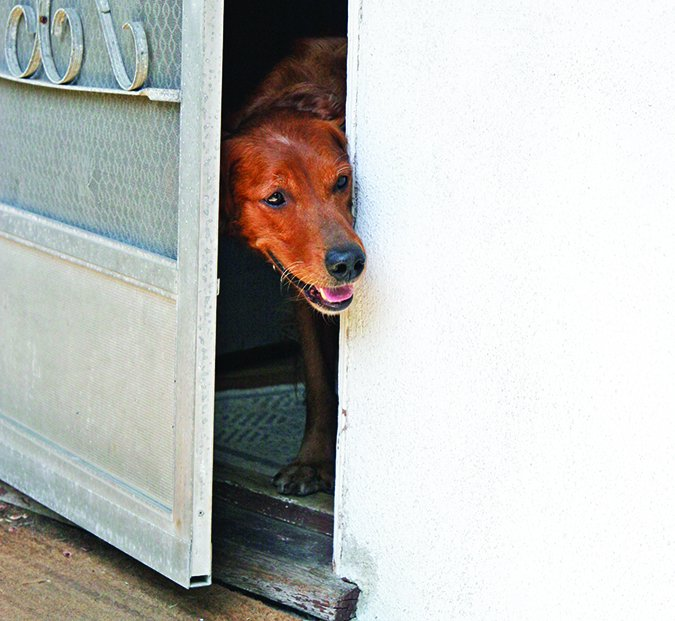 dog in the doorway