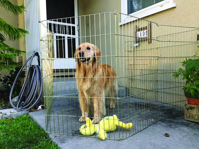 dog proof gate